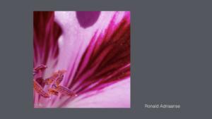 Foto's voor Galerie Abstracte Fotografie.018